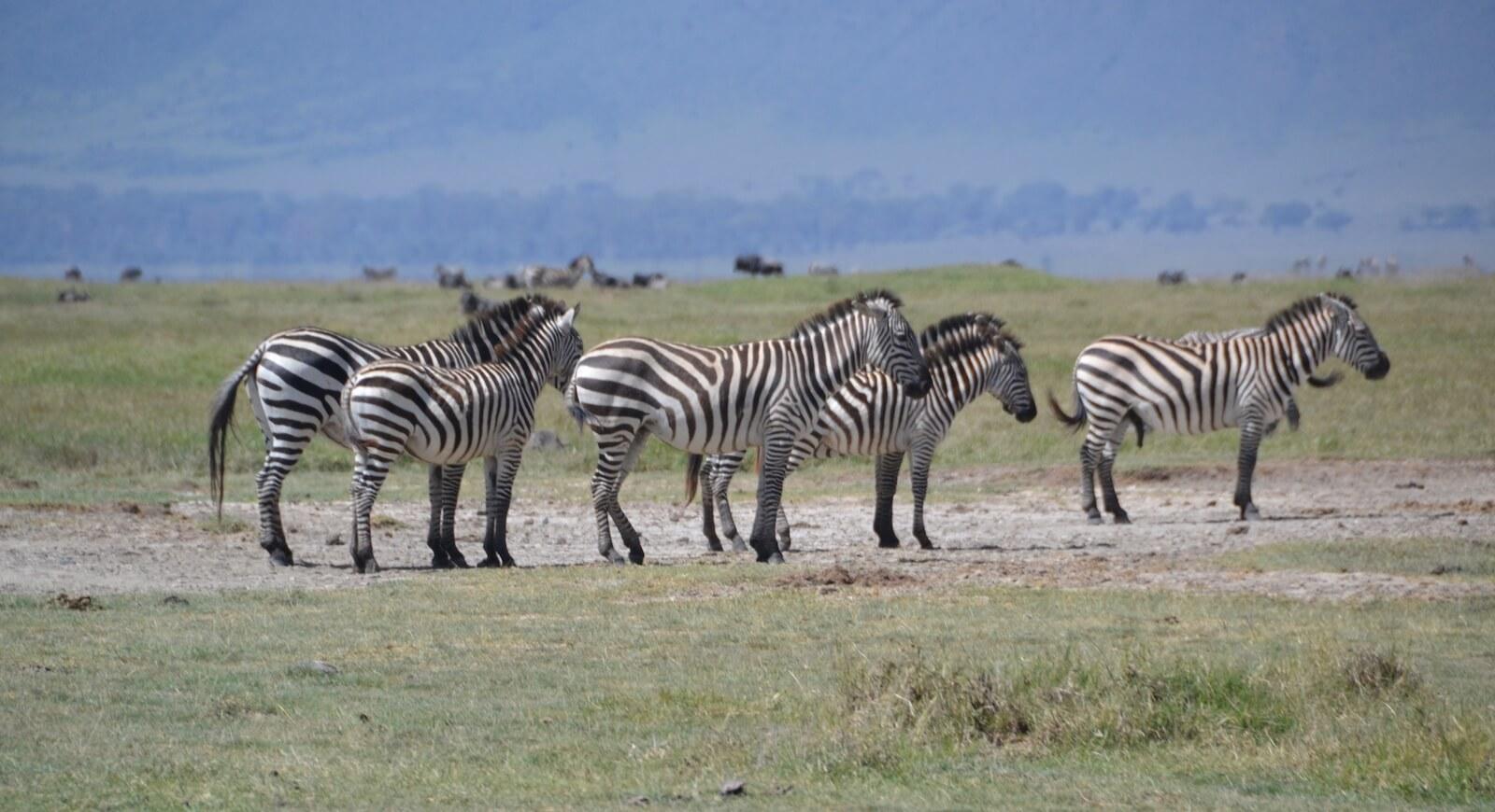 Na safari - fot. Jerzy Kostrzewa