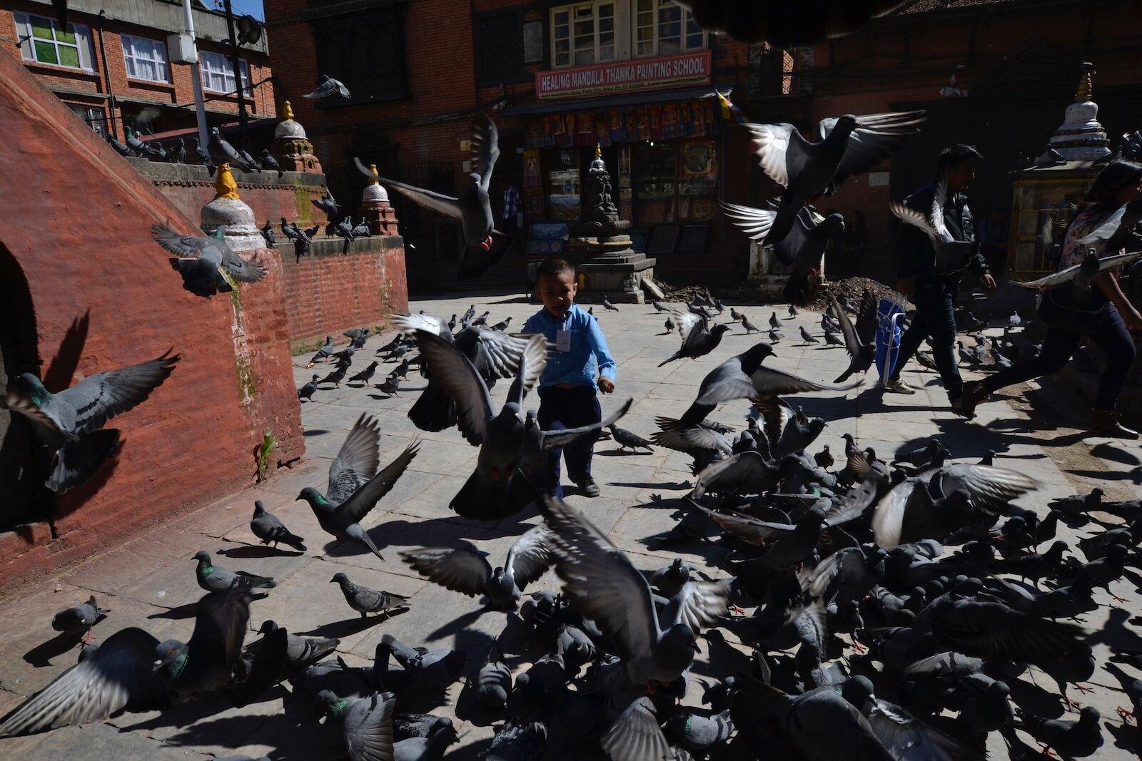 Gołębie w Boudanath - fot. Jerzy Kostrzewa