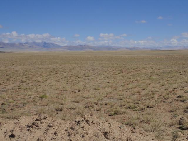 Mustang przy granicy z Chińskim Tybetem - fot. Jerzy Kostrzewa