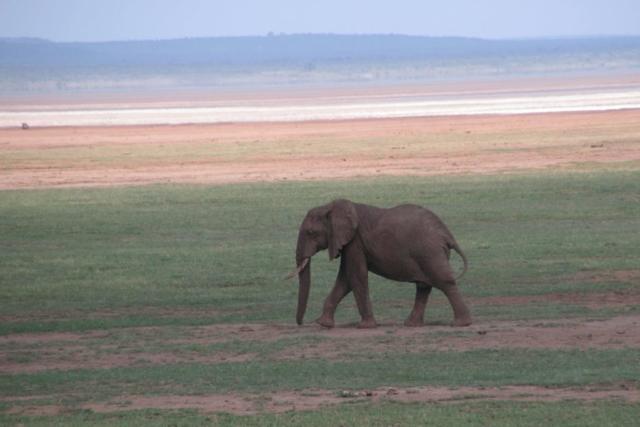 Na safari w Kraterze Ngorongoro , fot. Jerzy Kostrzewa