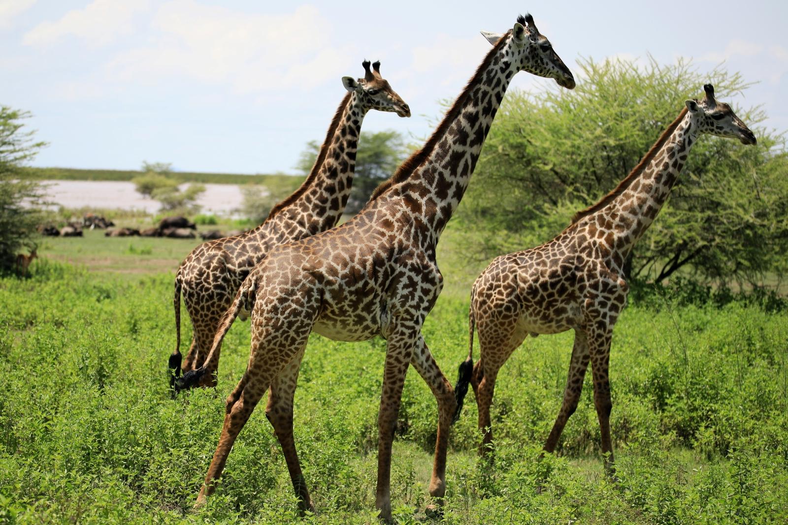 Migawki z safari - fot. Tomek Zaboklicki