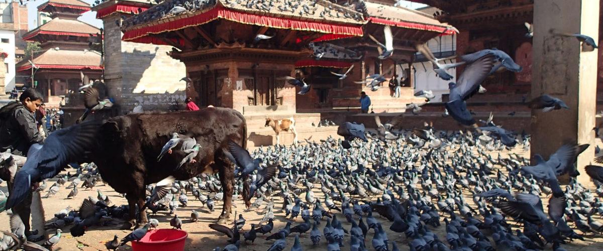 Durbar Square - Kathmandu - fot. Jerzy Kostrzewa
